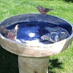 Pítko pro ptáky do zahrady
