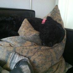 A Sunday afternoon nap...