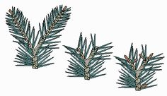 Tree Pruning Techniques pine | The Bonsai Primer: Pruning Pines