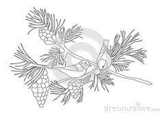 Birds sitting on a pine branch with cones. Pencil drawing by hand. Sketch. Vector Image