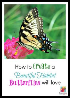 How to Create a Beautiful Habitat Butterflies will Love @Education Possible With warm weather settling in, many of us are shifting our attention outside. Is your backyard calling out for a little oomph this year? Turn your need into an engaging science lesson for your middle schooler by studying botany and insects – butterflies and the plants they need to thrive. You can learn all about these majestic creatures by building your own butterfly garden and letting your teen add some creative…