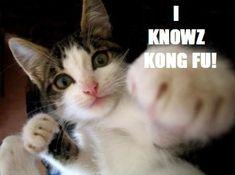 Kong Fu Kat