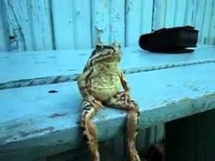 "Hold my calls, there's a frog sitting on a bench like a person. This guy is clearly about to break out a top hat and belt out an excerpt from ""Hello! Ma Baby."""