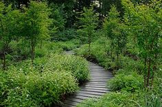 Winding wooden path…
