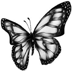 Butterfly tattoo for a coverup on my lower back. like the dark in the middle then have the colors get lighter at the outside Future Tattoos, Love Tattoos, Tatoos, Heaven Tattoos, Sweet Tattoos, Butterfly Coloring Page, Butterfly Clip Art, Butterfly Artwork, Dragonfly Art