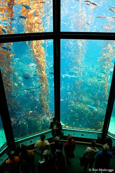Monterey Bay Aquarium - open Friday 9:30am-7pm, $35 each; $70 total