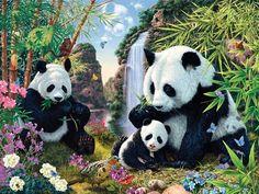Panda Fehler