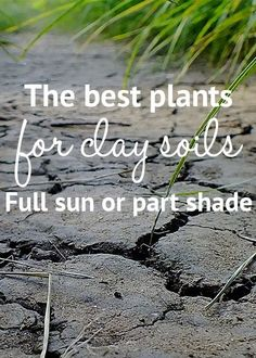 What are the best plants for clay soil? Plants and shrubs for clay soil and shade. Find the best plants full sun and partial shade in clay soil UK