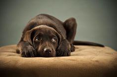 Cachorros conseguem perceber quando algu�m est� mentindo