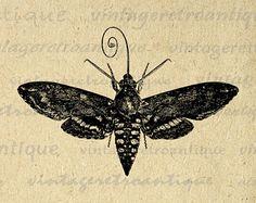 Image result for hawk moth illustration