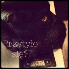 fat czarek ;)