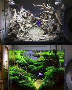 An amazing freshwater aquarium - Aquascaping Planted Aquarium, Betta Fish Tank, Home Aquarium, Nature Aquarium, Aquarium Design, Saltwater Aquarium, Aquarium Fish Tank, Freshwater Aquarium, Fish Tanks