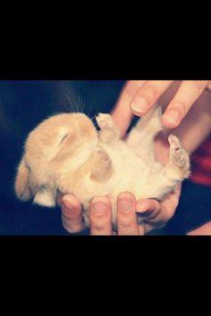 So adorable :) #love, #cute, #animals