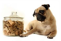 A highly requested dog treat recipe is for vegetarian dog treats- so we delivered! Here is a great recipe for homemade vegetarian dog treats. Dog Biscuit Recipes, Dog Treat Recipes, Dog Food Recipes, Cupcakes For Dogs Recipe, Dog Cupcakes, Homemade Dog Treats, Pet Treats, Amor Pug, Hot Dogs