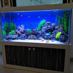 940+ Ide Aquarium Design. Com HD Gratid Unduh Gratis