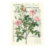 Antique French Receipt Shabby Roses Digital Collage Printable Graphic Scrapbook Supply Large Size Instant Download by FrenchPaperMoon on Etsy