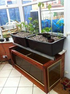 Small Aquaponics setups...