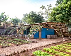 H&P architects constructs bamboo-supported toilet for school in rural vietnam