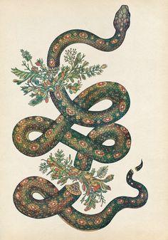 la serpiente- snake