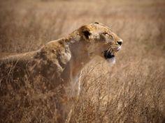 Radreisen Tansania - Bike Tours - Safari Serengeti - Tanzania - Tansania