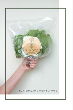 Butterhead Green Lettuce  Croponics - Hydroponics Veggies and Fruit.