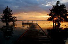 Martin Dies Jr State Park, between Woodville and Jasper, Texas ; rchrdbltzr