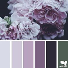 SnapWidget | today's inspiration image for { flora hues } is by @beautelicieuse ... thank you, Johanna, for another breathtaking #SeedsColor image share!