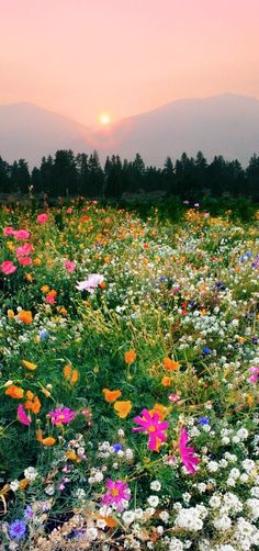 Flowers Photography Wallpaper Summer Fields Ideas For 2019