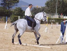 A Working Equitation horse going sideways over a pole. In an advanced test, the horse will canter sideways.