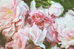 Flowers Photo: flowers-tumblr