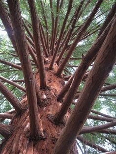 I went to the park today, and the approaching thunderstorm looked great, as well as this huge tree. Tree Leaves, Pine Tree, Tree Branch Tattoo, Tree Artwork, Tree Roots, Trendy Tree, Tree Forest, Garden Trees, Tree Of Life
