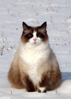 Gorgeous kitty - wonderful colors