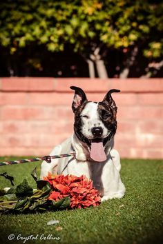 Shelter dog Chloe , photoshoot. Hoping for a home