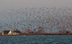 Barraques i ocells. Visions d'hivern
