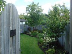 Simple backyard landscape.
