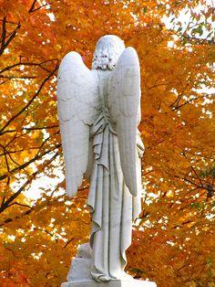 photo by Garden Beth-Mount Auburn Cemetery, Cambridge, MA