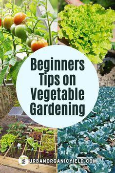 Vegetable Garden Tips, Urban Gardening, Vegetable Gardening, Organic Gardening, Container Gardening, Growing Vegetables At Home, Types Of Vegetables, Organic Vegetables, Starting A Garden