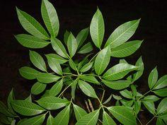 Las plantas se encargan de refrescar, regular el ambiente y purificar el oxígeno