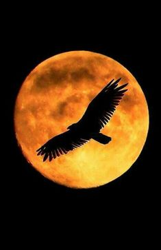 Here are some amazing Full Moon Photography Tips and Ideas that will come handy if you are keen on taking creative moon pictures. Moon Photos, Moon Pictures, Moon Pics, Stars Night, Street Photography, Nature Photography, Photography Tips, Amazing Photography, Foto Picture