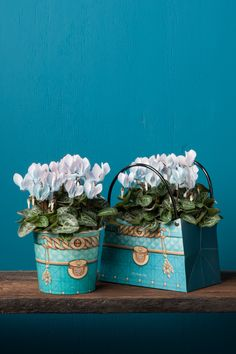 Blue Make-Upz cyclamen by Uniq-Plants