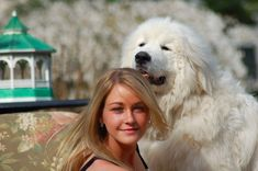 """""""Connor""""  Darlington`s High and Mighty  Darlington Great Pyrenees.com For more info. Google """"Susie Wong Pet Therapy""""  The Legacy Lives On"""