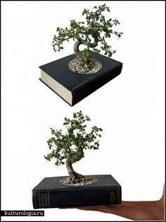 Indoor Gardening Books Creative crafty ideas for reusing old vintage books gardening modern decorative planters made of old recycled books by gartenkultur workwithnaturefo