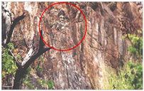 This carving is carved on a rock on the Ella – Wellawaya Road. It is visible from the main road if one takes an interest in locating it. It's a recent discovery of mine. Getting closer is not safe as the surroundings are full of wasps. This carving has lot of similarities to Rishi Pulasthi's statue. The head dress and the moustache and the beard are similar to that of Rishi Pulasthi. As the cave Rawana hid Seetha is very close to this carving there is a great possibility.