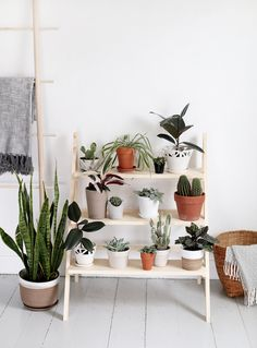 Get inspired to make a plant stand, hanging planter or basket for your beloved plants! See out Favorite DIY Plant Projects for more! Boho Bedroom Diy, Diy Home Decor For Apartments, Deco Studio, Diy Ladder, Plant Ladder, Plant Projects, Wood Projects, Diy Casa, Diy Plant Stand