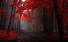 Λογοτεχνικό περιβόλι!: Εκπληκτικές φωτογραφίες με φόντο το Φθινοπωρινό δάσος με…