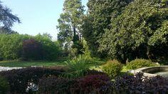 Scorci sul giardino