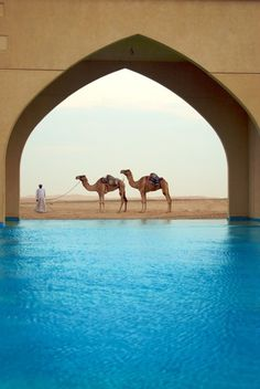 WOW. the colours and contrast. I want to be here.  --Oasis Middle East camels caravan Arabian beautiful