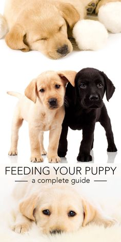 Feeding Your Puppy