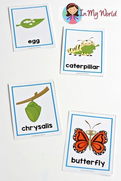 Spring Preschool Centers Butterfly Life Cycle Cards