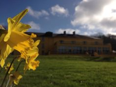 Spring time here at the Hotel www.ayhenaeumhousehotel.com